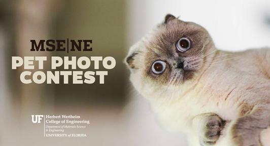 Pet photo contest art